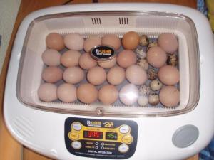 1266508538_75061990_1-Fotos-de-incubadora-automatica-para-aves-exoticas-y-de-corral